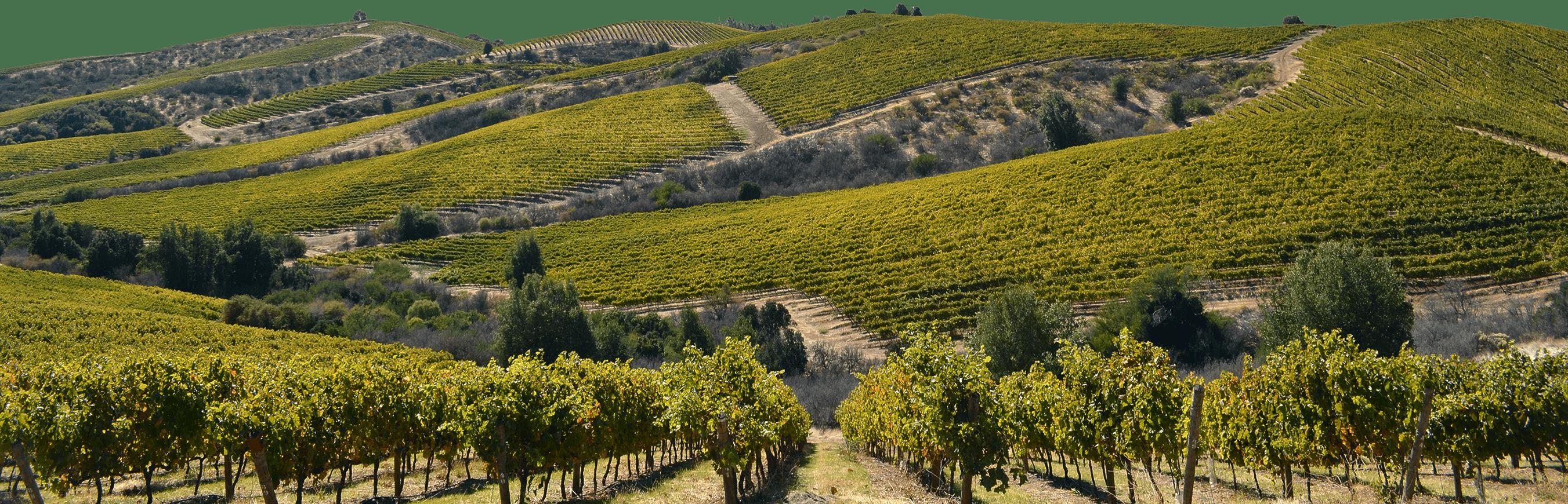 Concha Y Toro Mountain Range